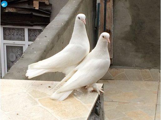 Beyaz Mardin