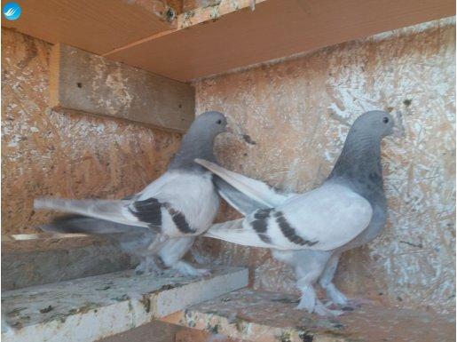 İyi kuş sahibi olmak isteyenler.