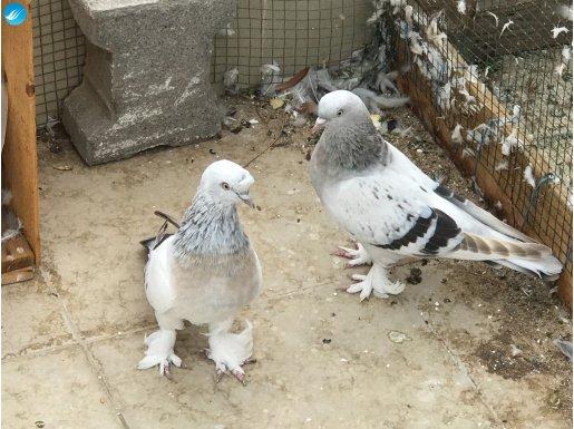 Mardin Çakmaklı Çift