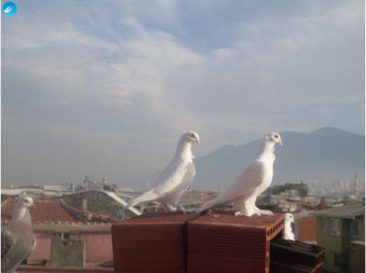Kuş Güzelleri