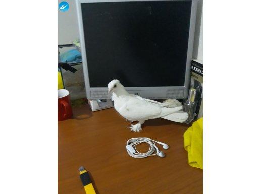 Bu kuşu Alan Pişman Olmaz