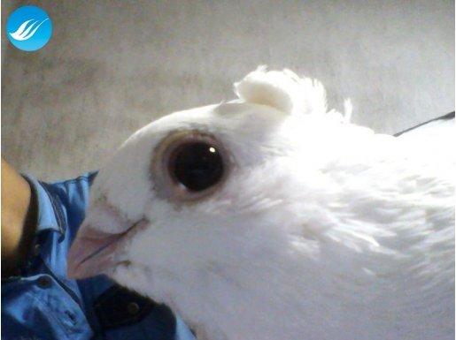 Kuş Görüldüğü Gibidir