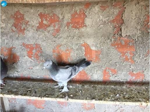 Oyun kuşu