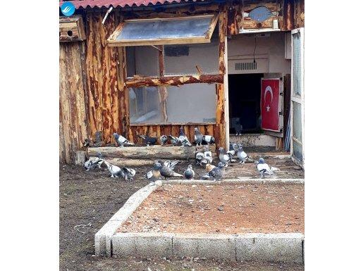 30 adet oyunlu paslı takkalı oyun kuşları