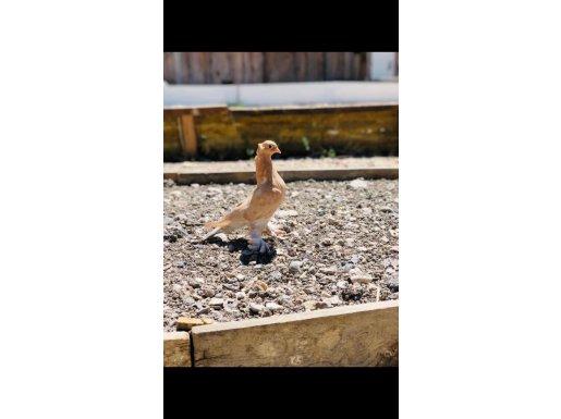 Yılların emeği derneğimizin güvencesi ile Oyun kostüm kuşlar