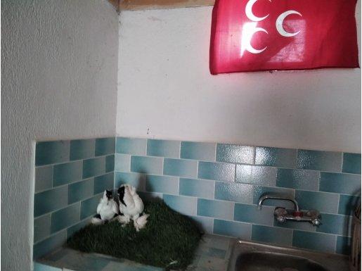 Türkiyede sayılı olan kuşlardan