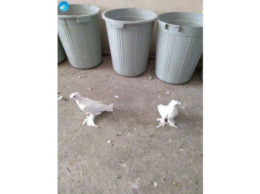 Beyaz cübbeli sapkalı salvarlı Angut