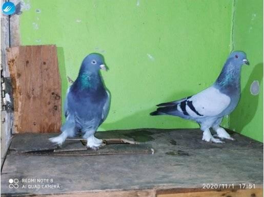 Süper oyun kuşları