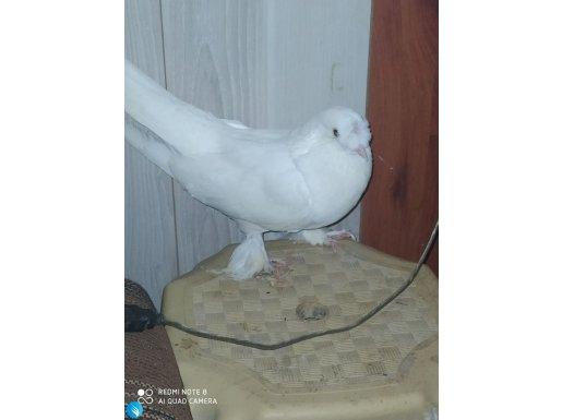 Beyaz huzur