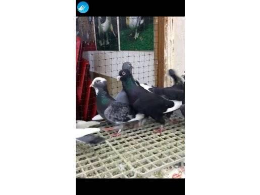 Adana Kuşları 3 Takım