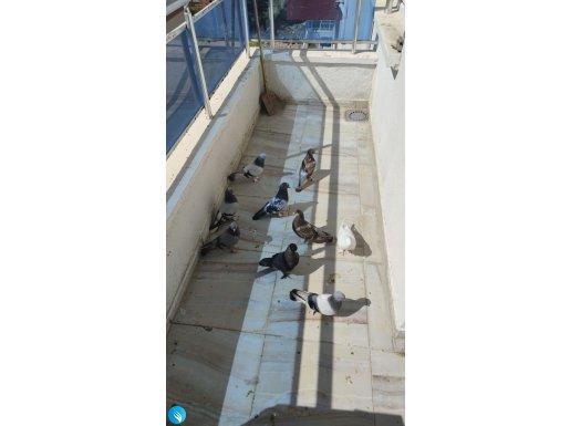 Çok iyi damızlık kuşlar