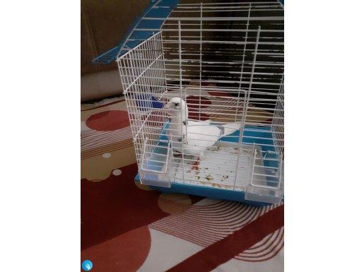 Süt beyaz kuşu