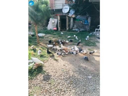 Oyun Kuşları