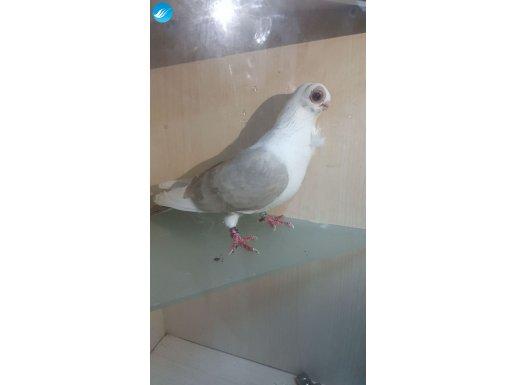 Kuşumuz görseldir